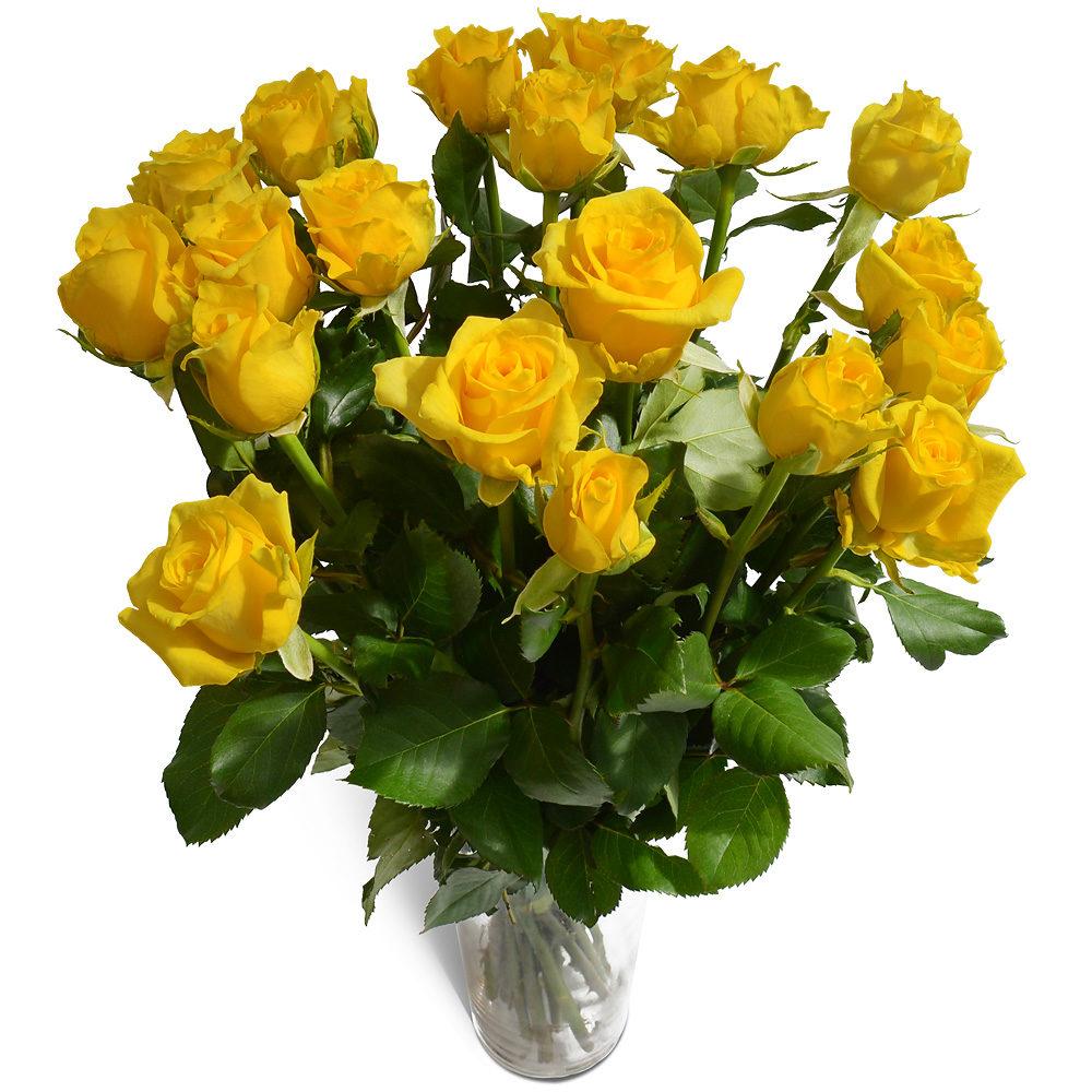 0036_yellow_roses.jpg