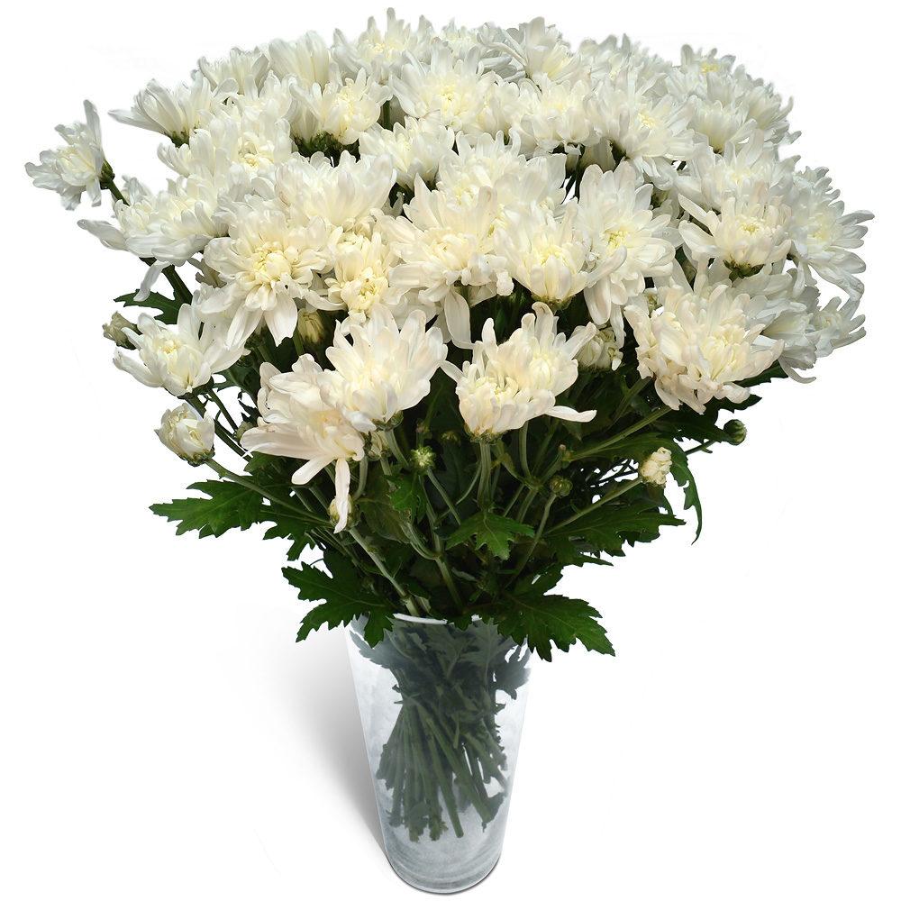 White Crysanthemums