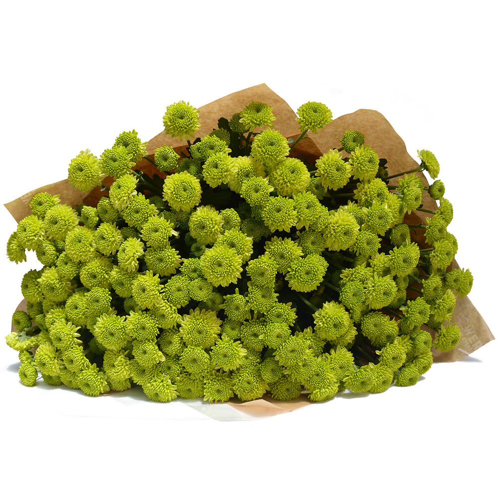 Green Crysanthemums